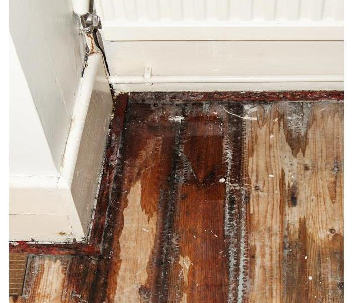 Water on a wooden floor causing mold growth